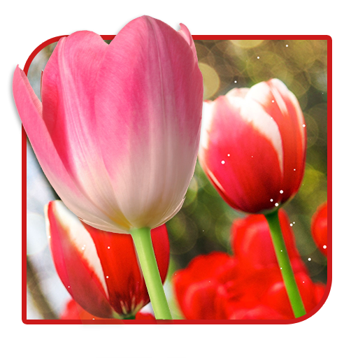 Amazon.com: Tulips Flower Free Live Wallpaper: Appstore