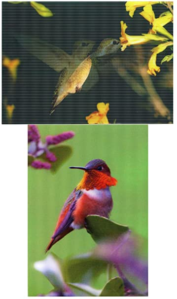 Amazon 2 different hummingbirds motion and 3d lenticular 2 different hummingbirds motion and 3d lenticular postcard greeting cards m4hsunfo