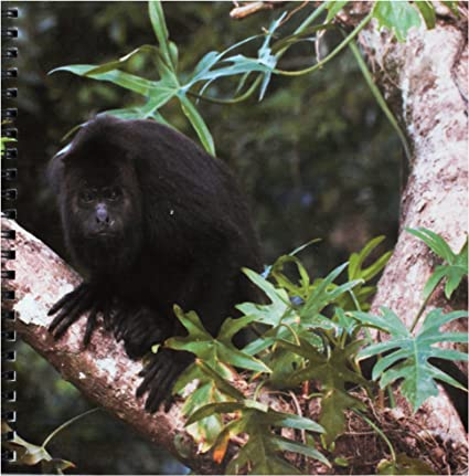 Belize Sa02 Pox0024 Pete Oxford Drawing Book 3dRose db/_85591/_1 Black Howler Monkey 8 by 8-Inch 3D Rose Community Baboon Center