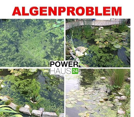 Antialgas Protect 150 g suficiente para 10 000 l de agua Estanque: Amazon.es: Jardín