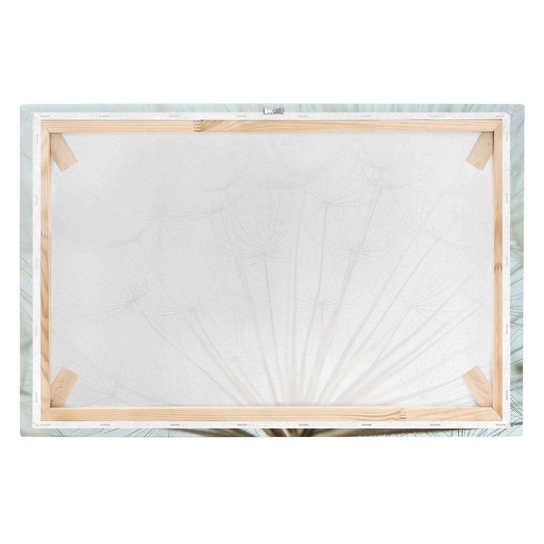 Bilderwelten Bilderwelten Bilderwelten Leinwandbild - Schöne PusteBlaume Makroaufnahme - Quer 2 3, 40cm x 60cm B0744D2YHP Wandtattoos & Wandbilder f4ec9a
