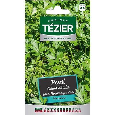 Seed Bag Italian Giant Parsley Race Novas Tezier : Garden & Outdoor