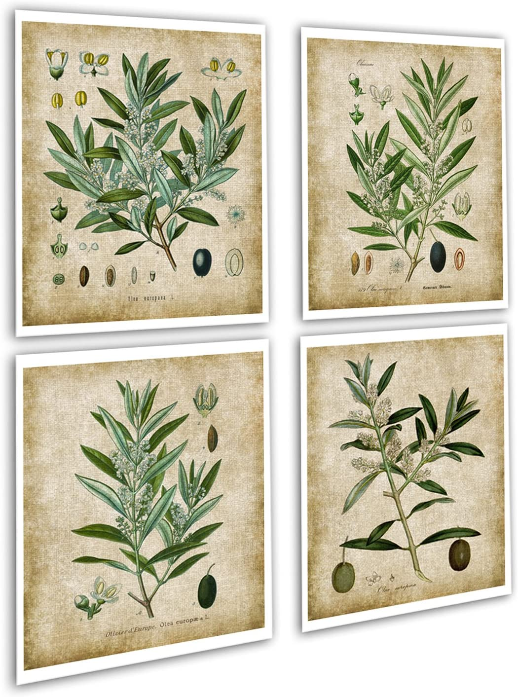Farmhouse Wall Decor Olive Plants Home Decor Set of 4 Unframed Botanical Art Prints, Olive_plants_4A