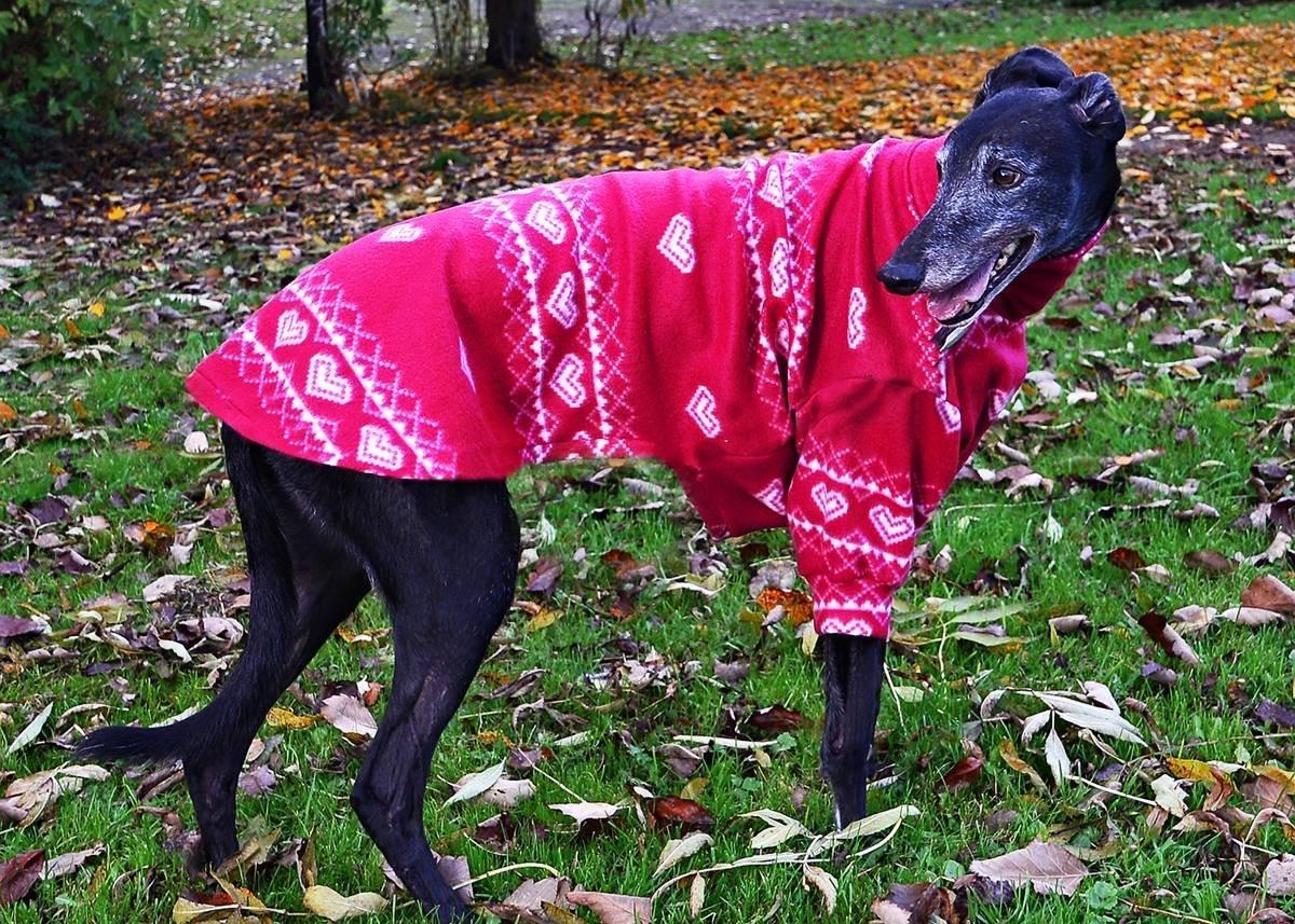 Dogandhome Schoner Hunde Pullover Erhaltlich In Vielen Grossen Und 3