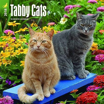 Calendario 2018 gatos tigres – gatos gris – gatitos y gatos diseños – humor gatos –