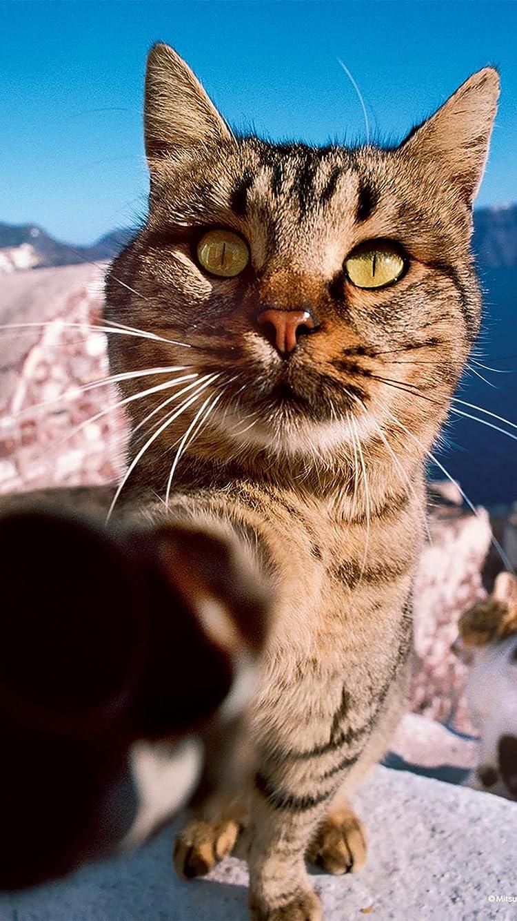猫 Iphone8 7 6s 6 750 1334 壁紙 岩合光昭 パンチ一発 その他 スマホ