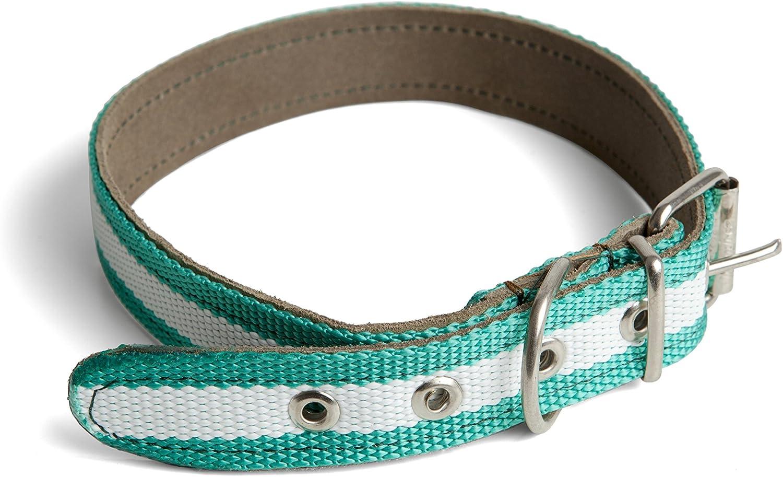 Collar Andalucia y Cuero para Perro 3x45cm: Amazon.es: Deportes y ...