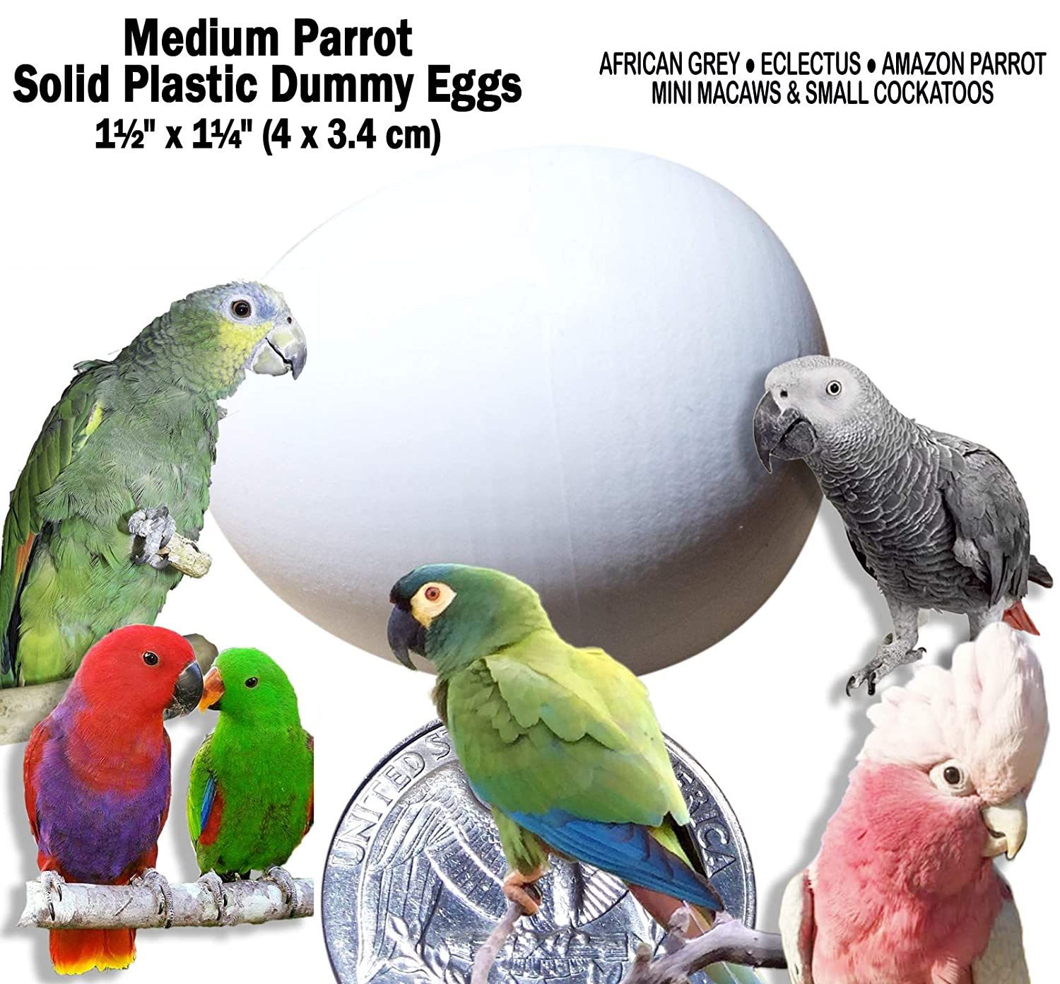 "DummyEggs Med Parrot African Grey, Eclectus, Amazon, Small Cockatoo or Macaw. Realistic Solid White Plastic 1.5"" x 1.25"" (4 x 3.4 cm) Fake Eggs Control Laying!"