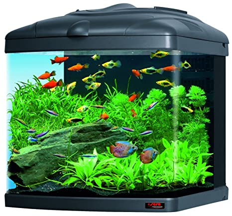 Sera 31102 Mondi Biotop Nano Cube 60 un 60L Agua dulce Acuario Completo con pl de T5 iluminación y Filtración.: Amazon.es: Productos para mascotas