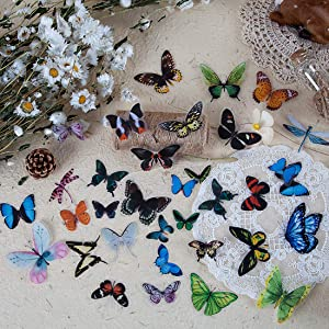 120 Pieces Butterfly Dragonfly Insects Stickers Set PET Transparent Waterproof Decorative Decals for Scrapbook DIY Crafts Album Bullet Journal Planner Water Bottles Phone Cases Laptops