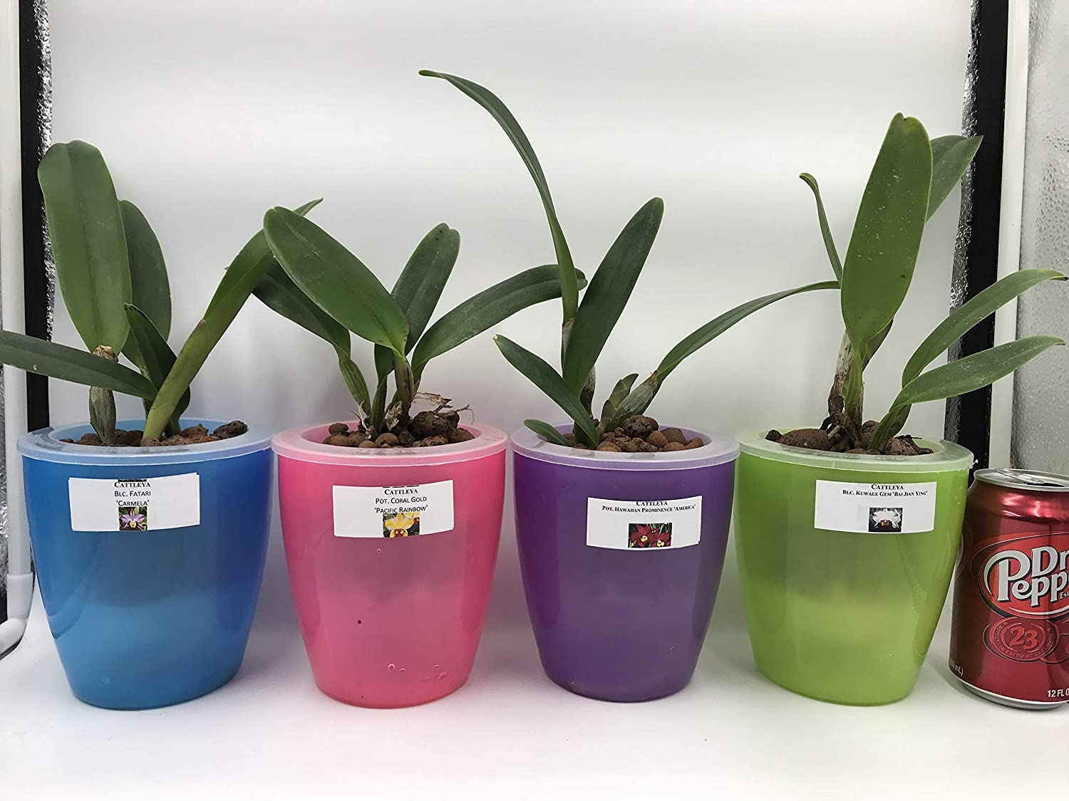 Perfect Orchid Pots Easy Watering Pots 3 Blue – No Orchids