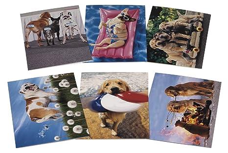 Amazon Avanti Birthday Card Collection Paws Itively Fabulous