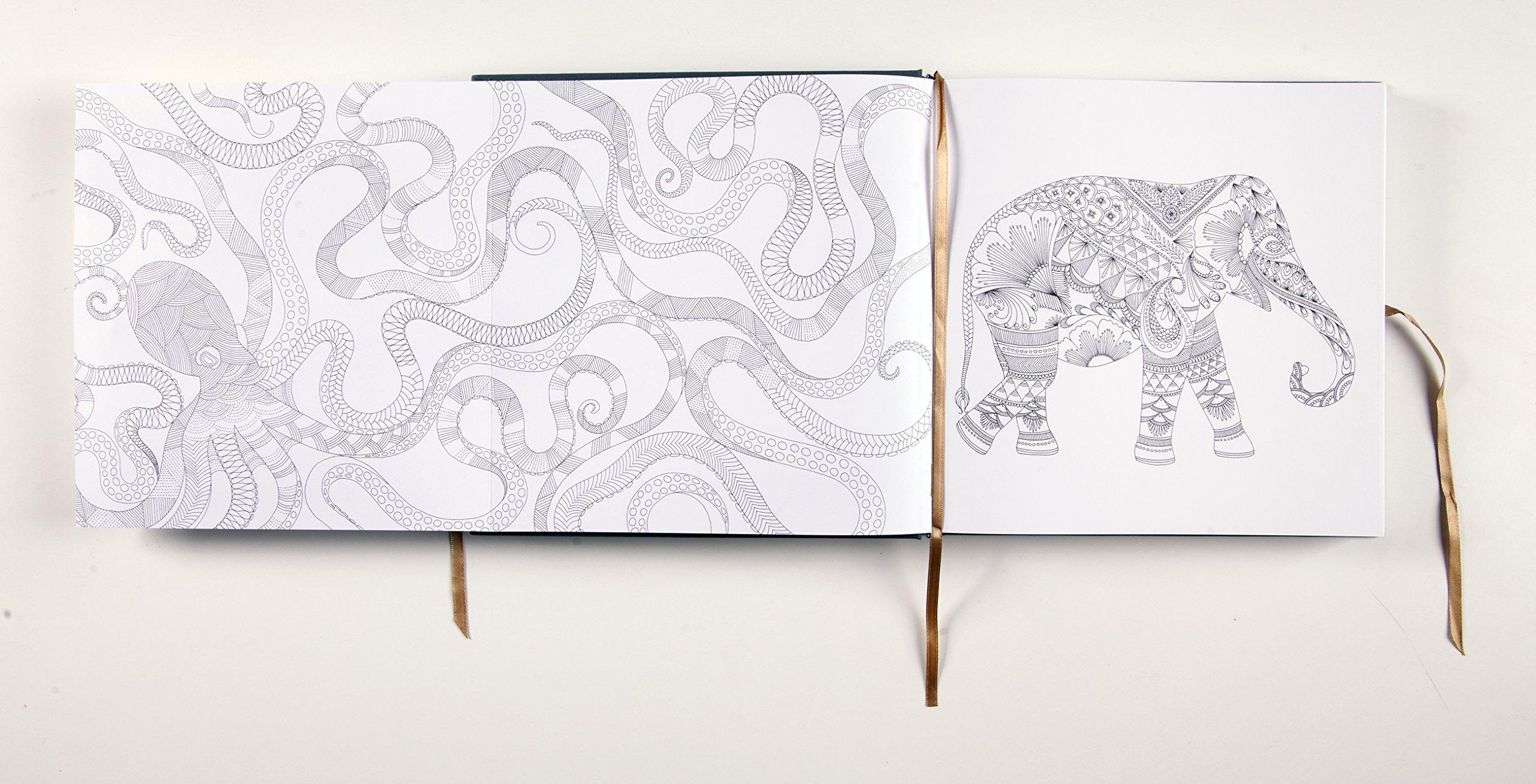 Millie Marottas Animal Kingdom Deluxe Edition A Colouring Book Adventure Amazonde Marotta Fremdsprachige Bucher