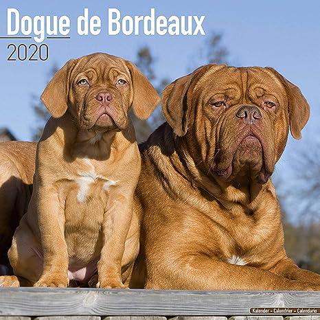 Modele De Calendrier 2020.Dogue De Bordeaux Calendar 2020 Dog Breed Calendar Wall Calendar 2019 2020