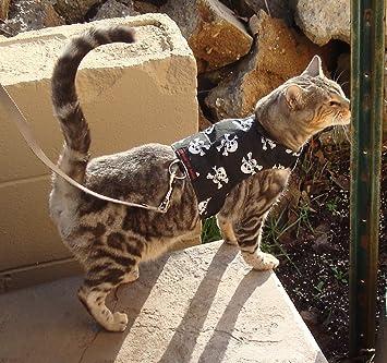 mynwood Cat chaqueta/arnés de calaveras gato hasta 8 mes – Escape prueba: Amazon.es: Productos para mascotas