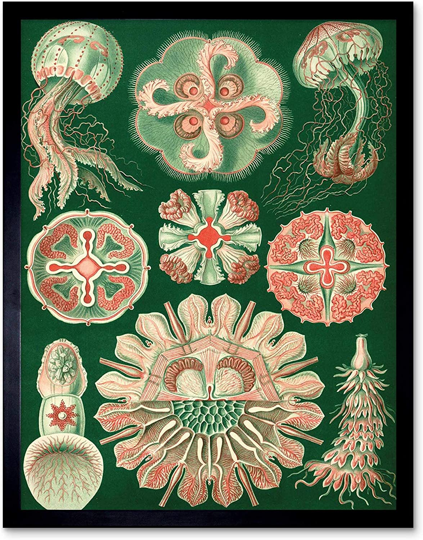 ERNST HAECKEL SEA CREATURE GERMANY Poster Nature Biology Canvas art Prints