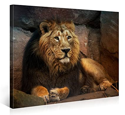 Amazon.com: Large Canvas Print Wall Art - RESTING LION - 40x30 Inch ...