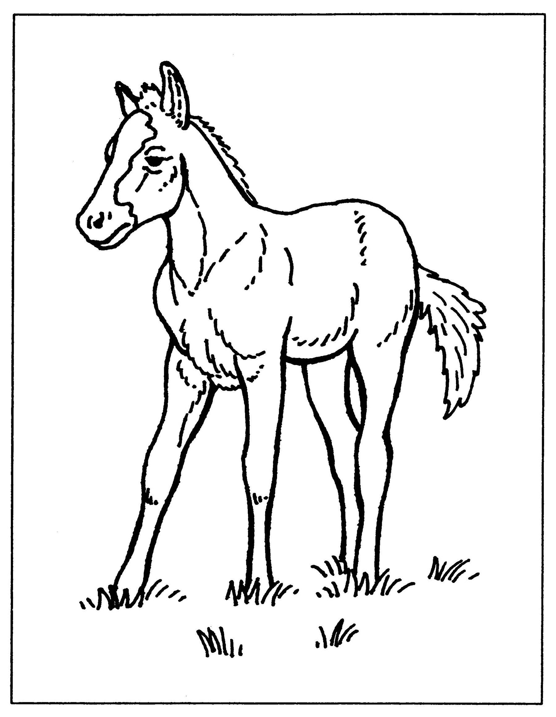 Baby Farm Animal Coloring Pages Wecoloringpage Baby Page adult | 2322x1800