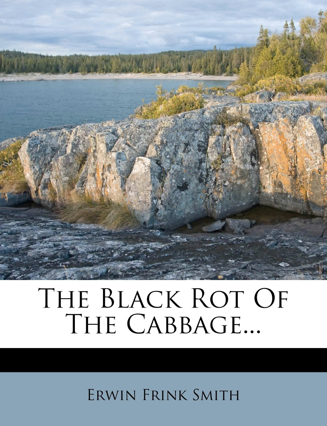 The Black Rot Of The Cabbage... pdf