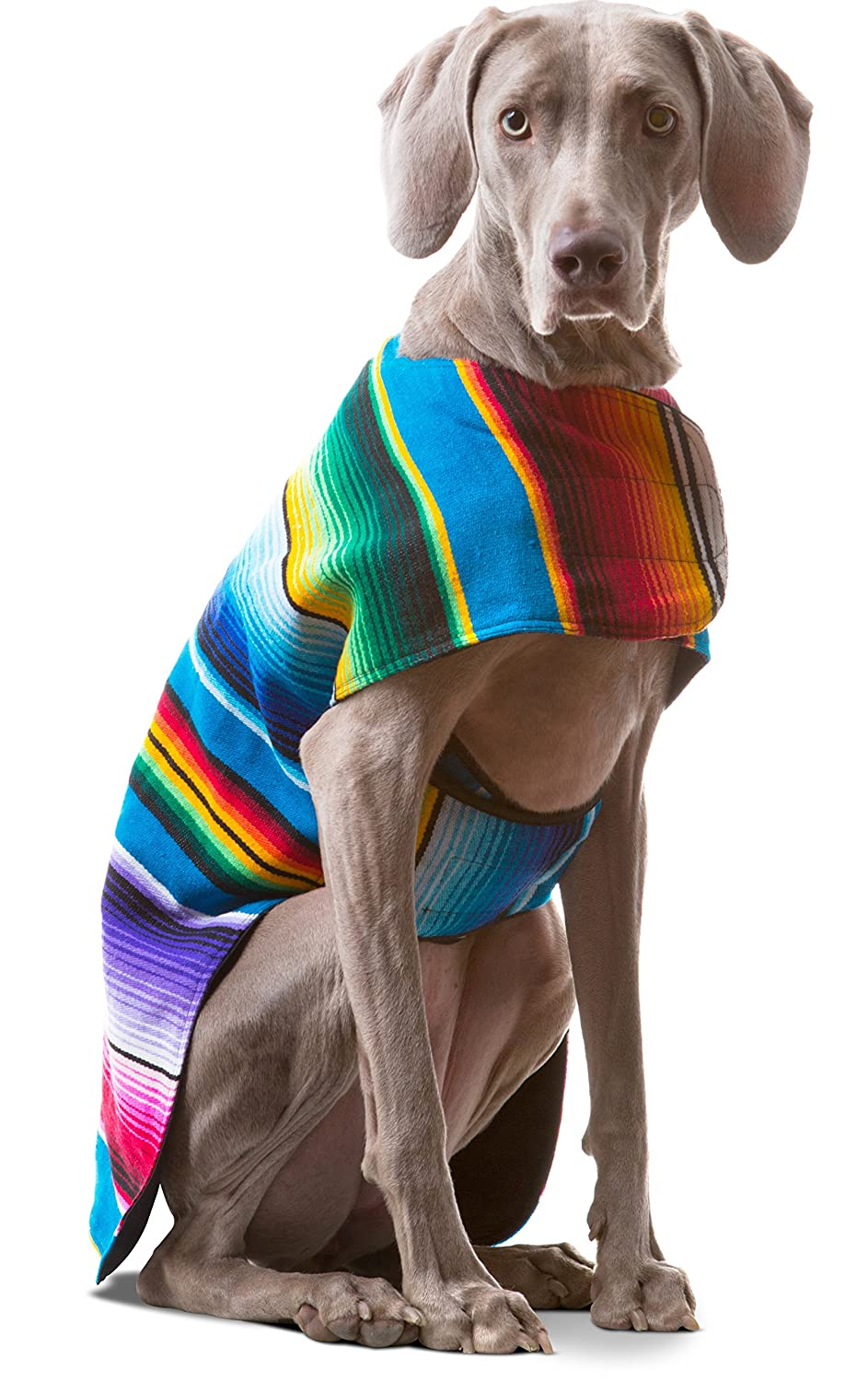 Colorful sweater on gray dog