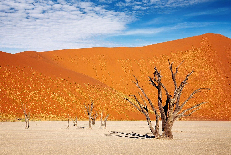 Reptile Habitat, Terrarium Background, Orange Desert Sky with Tree - (Various Sizes) (21x48) by BannersNStands