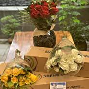Dreamcutflowers - Premium Roses Subscription Box