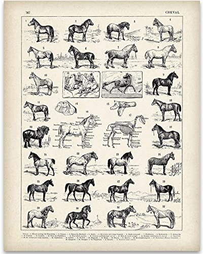 Vintage French Horses - 11x14 Unframed Art Print - Great Stable Decor or Gift for Equestrian