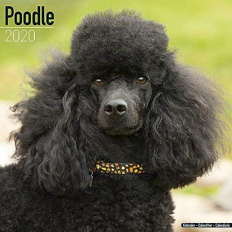 Poodle Calendar 2020 Dog Breed Calendar Wall Calendar 2019 2020