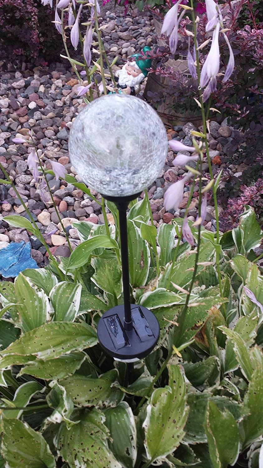 Solar Garden Stake Lights - Home Design Ideas and Pictures