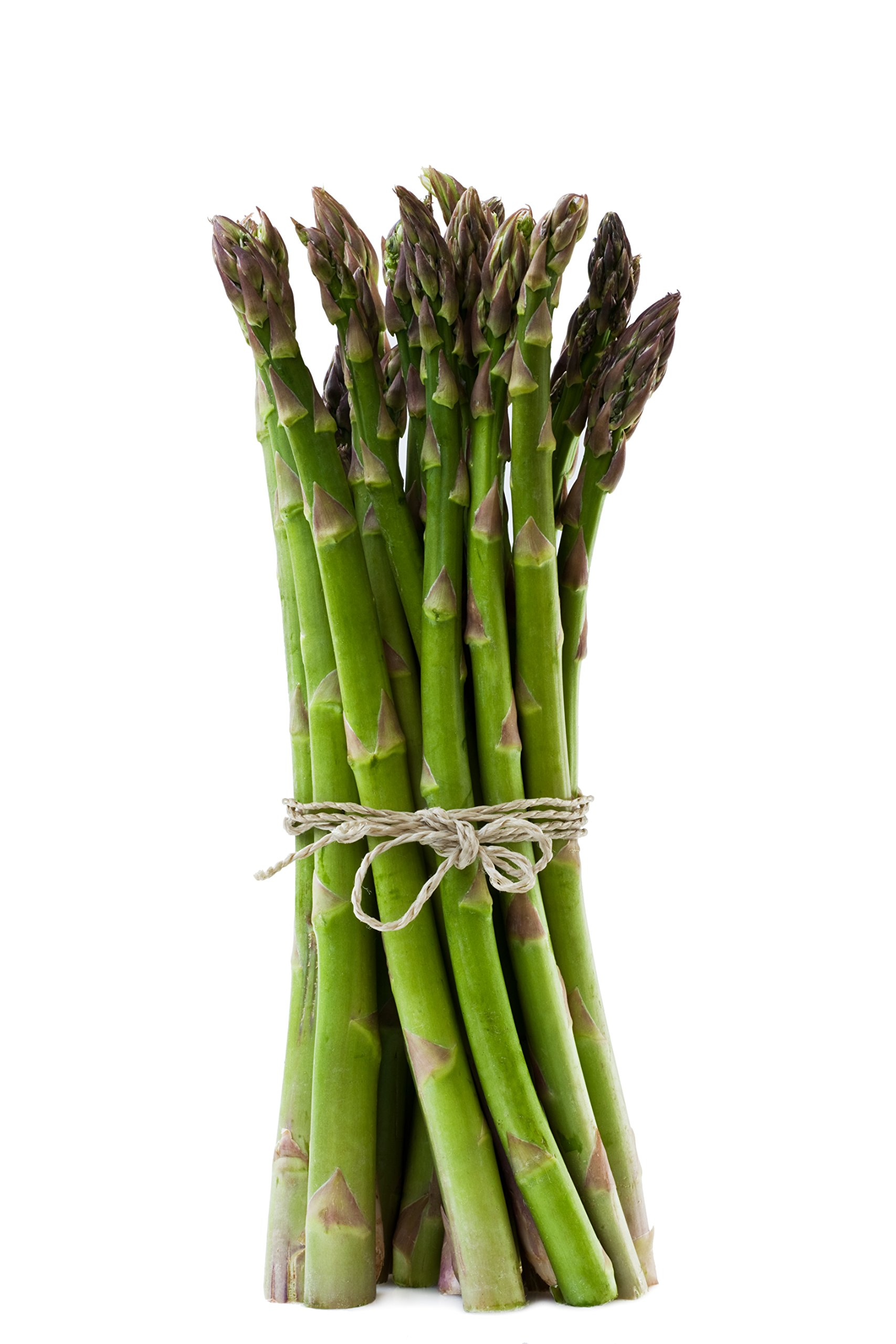 Millennium Asparagus Large Crowns - All Male - Non-GMO - Top Producing Variety- Northwest Grown (50 Crowns)