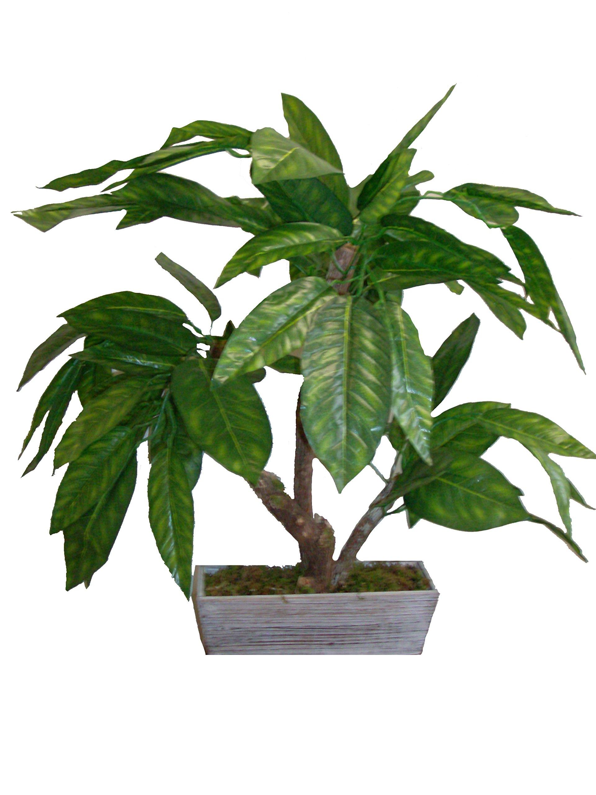Mamone Home & Garden H Mini Mango Leaf Tree In Wood Planter, 28''