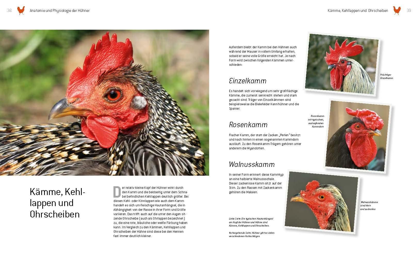 Das große Buch der Hühnerhaltung im eigenen Garten: Amazon.de: Axel ...