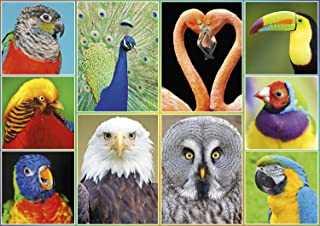 product image for Buffalo Games - Amazing Nature Collection - Pretty Birds - 500 Piece Jigsaw Puzzle