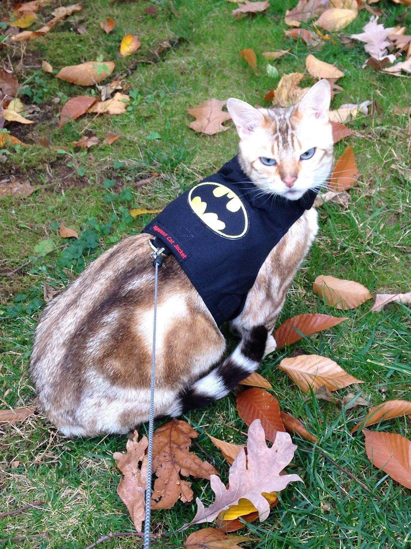 mynwood Harnais pour chat/chaton Batman jusqu'à 8mois–Escape imperméable