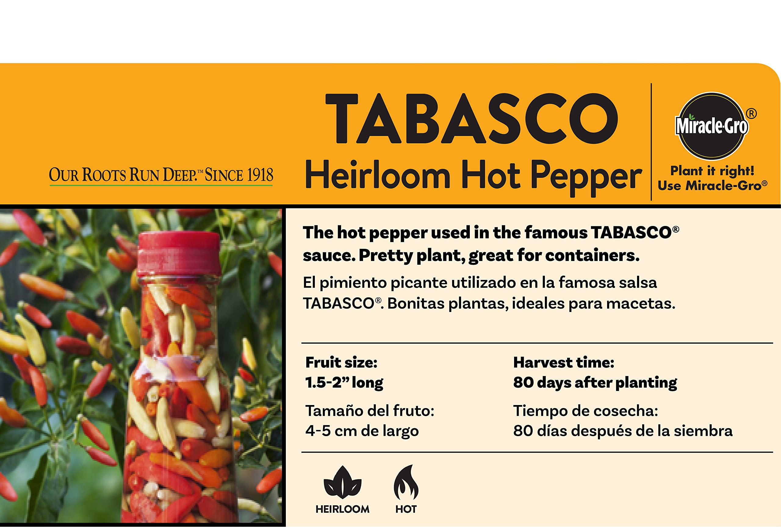 Bonnie Plants Tabasco Pepper - 4 Pack Live Plants, 1.5 - 2 Inch Fruits, 24 - 36 Inch Tall Plants, Great For Pickling & Preserving by Bonnie Plants (Image #3)
