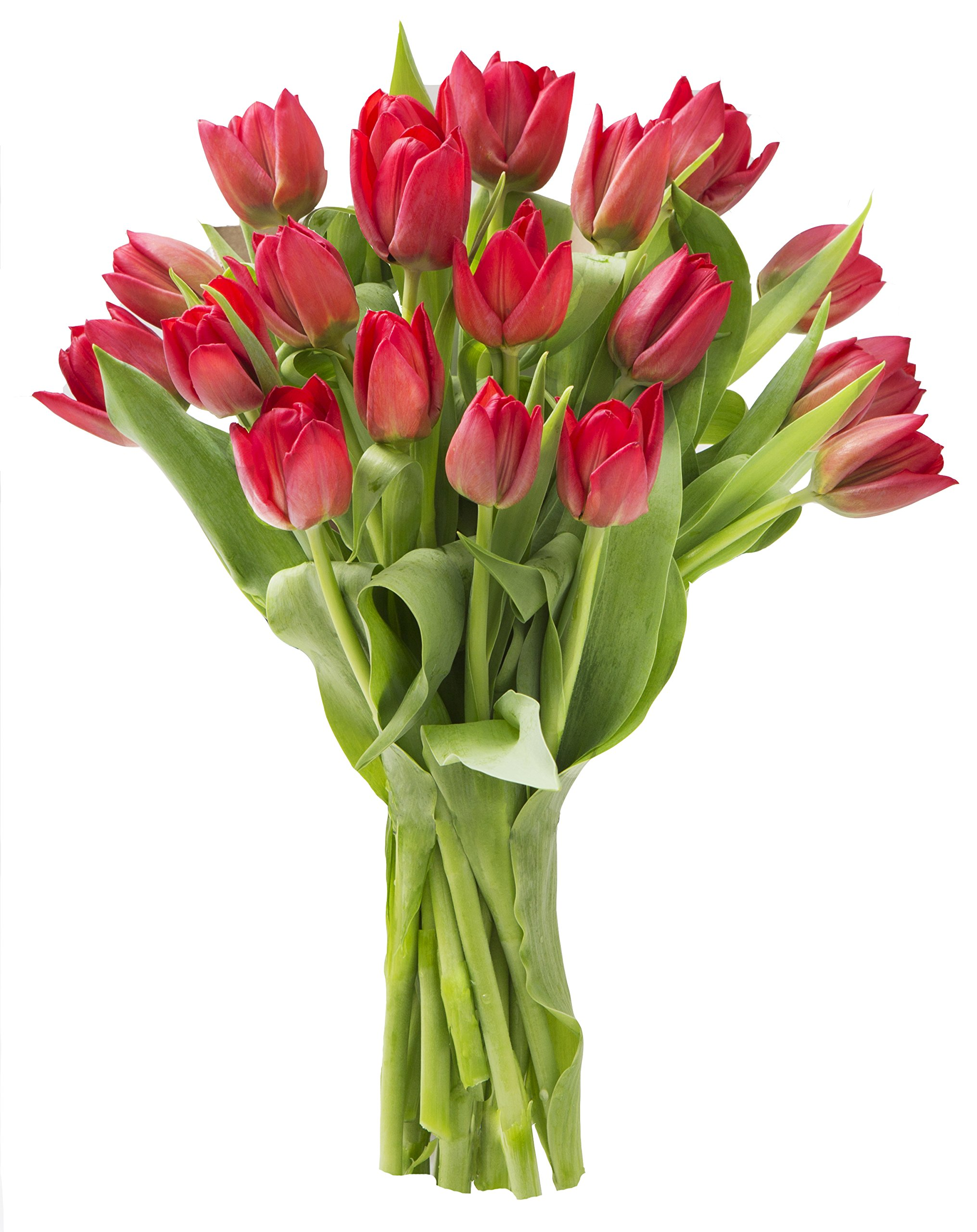 Blooms2Door 20 Red Tulips (Farm-Fresh Flowers, Cut-to-Order, and Homegrown in the USA)