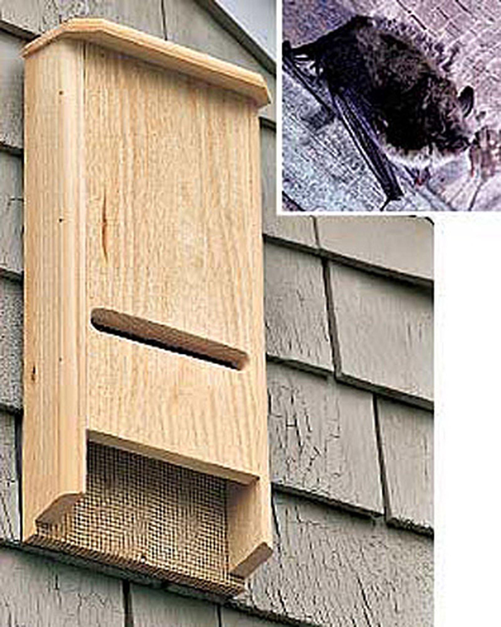 Coveside Bat House Batchelor Pad
