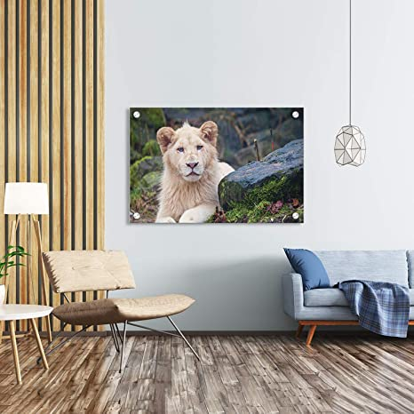 Amazon Com Acrylic Wall Mount Frameless Picture Frame Lion Wall Hanging Floating Photo Frames Clear Plexiglass Poster Signs For Home Decor Certificate Art Painting Without Studs 36 X 24