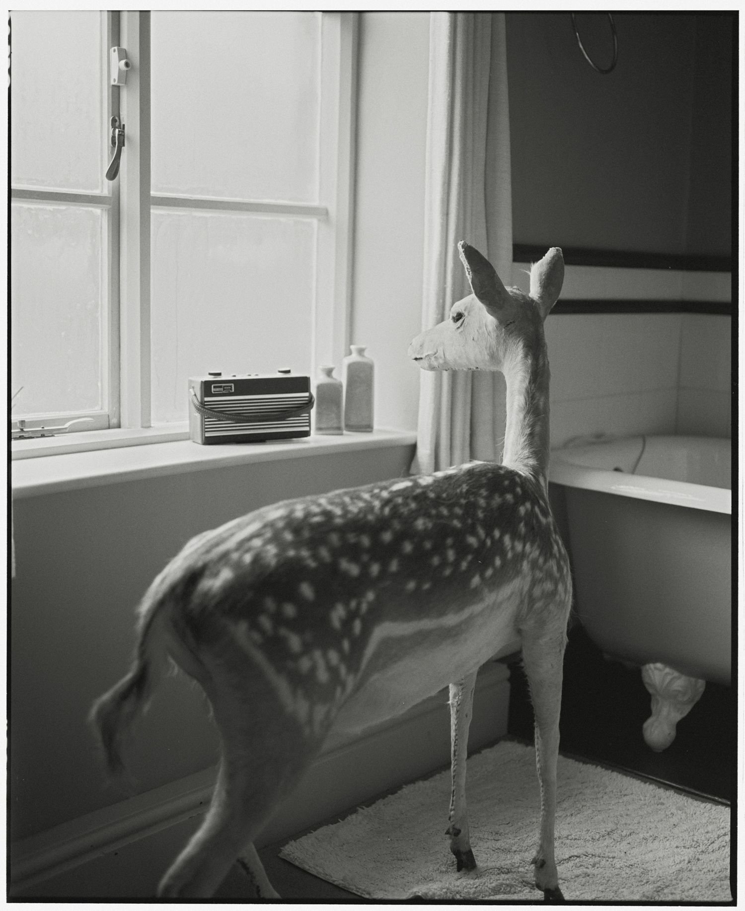 Deer In The Bathroom-2 (medium size)