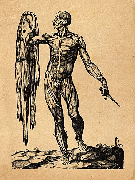 Amazon.com: Skinless Man - Andreas Vesalius Anatomy Engraving ...