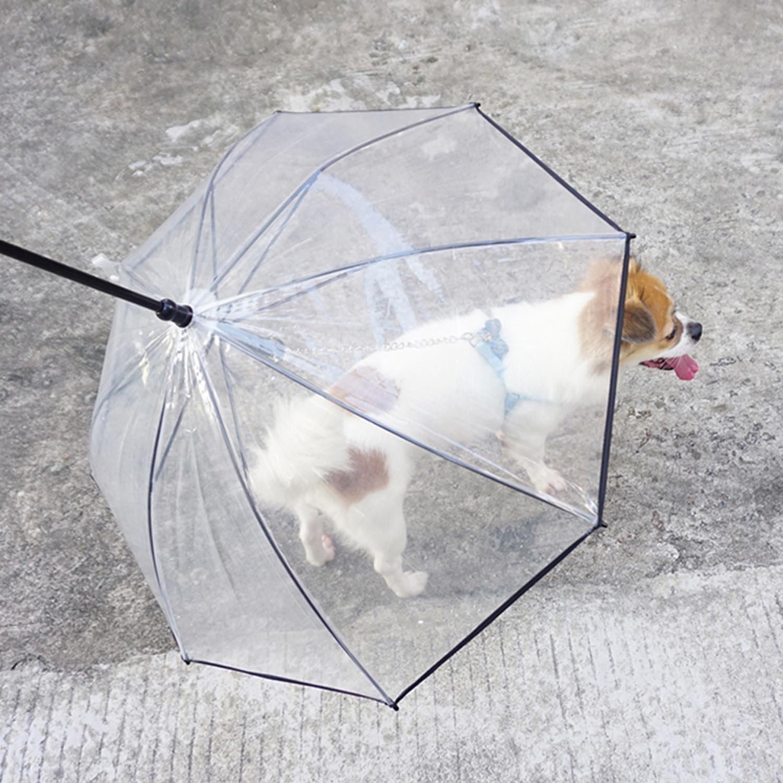 Morjava W555, paraguas con correa para mascota, perro, transparente y resistente al agua para pasear al perro blanco W555-DU: Amazon.es: Productos para ...