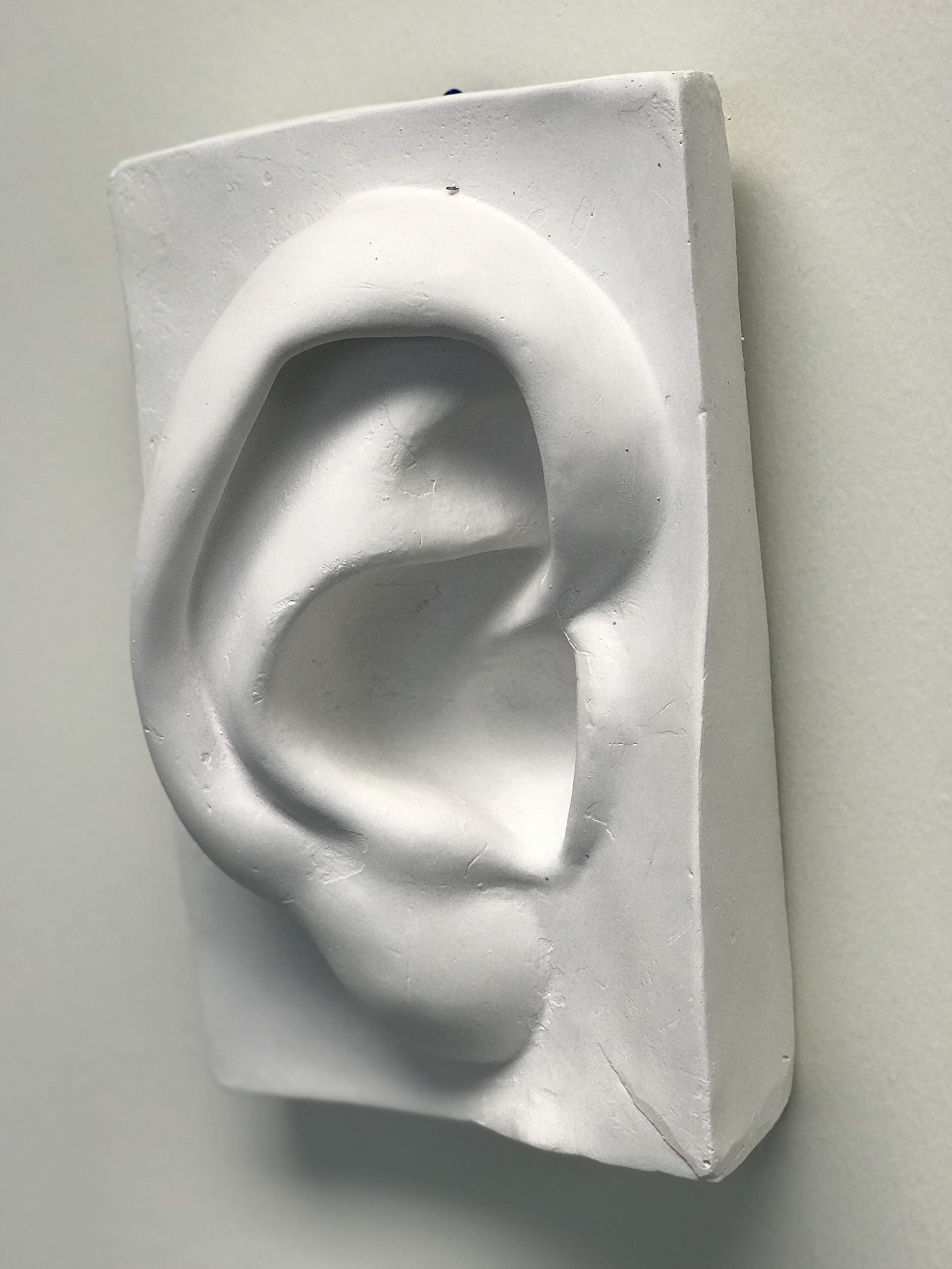 Torino Artist Plaster Cast Ear Figure for Art Studio, Classroom, Display, Home, Office or as a Gift
