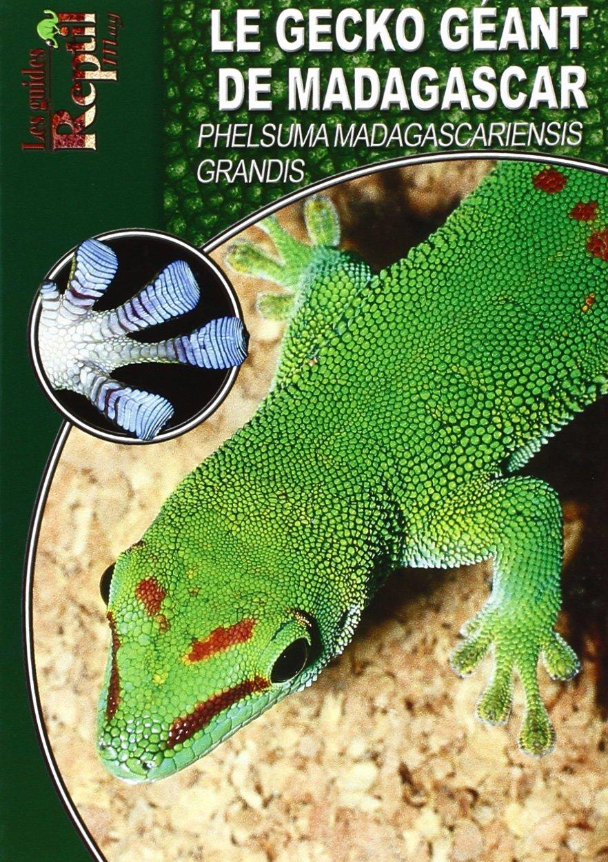 Le Gecko Géant de Madagascar: Phelsuma Madagascariensis Grandis Broché – 7 février 2008 Ingo Kober Animalia 2915740518 LIVRES PRATIQUES
