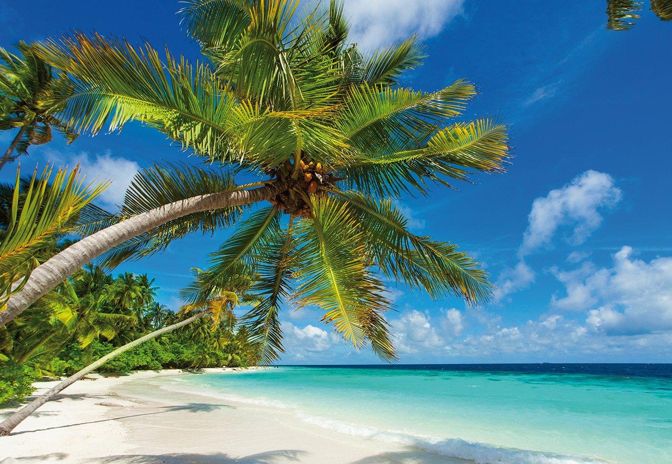 AM Wohnideen Vlies Tapete/Tapete *Strand/Meer/Sommer/Palmen/Urlaub ...