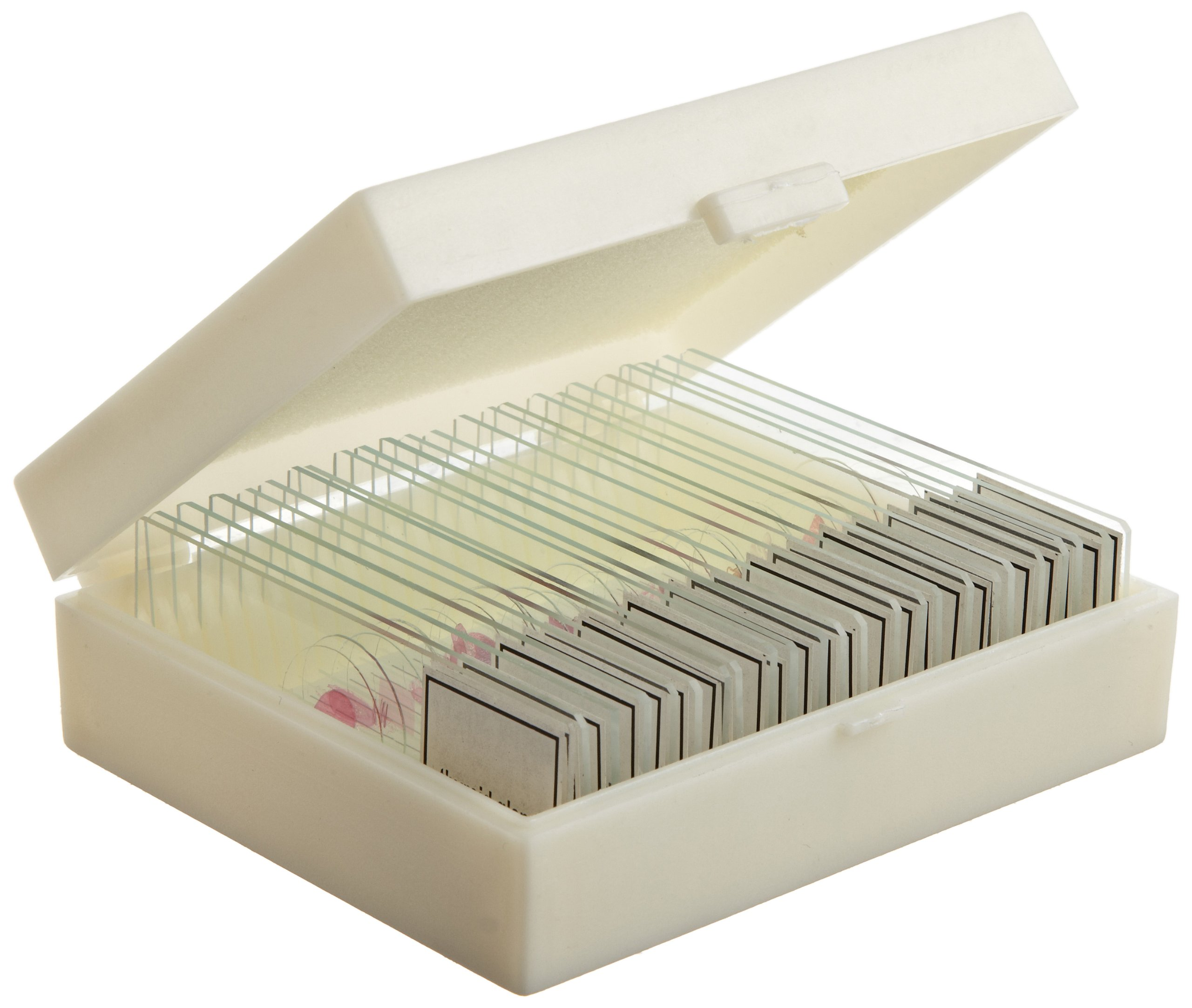 ETA hand2mind Prepared Glass Microscope Slides, Anatomy and Physiology (Pack of 24)