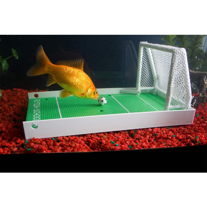 Amazon R2 Fish School plete Fish Training Kit Science Kit