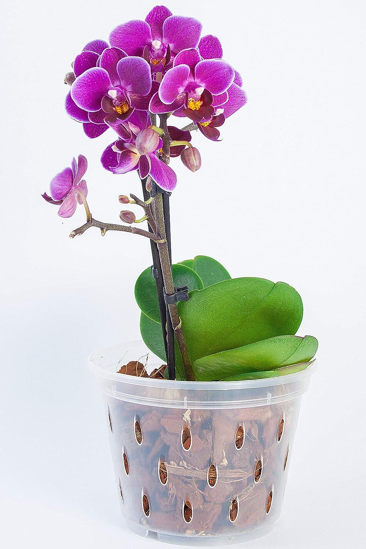 Dan Plastic Orchid Pot