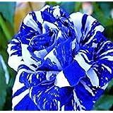 MANYI - 1confezione x 20 pz di sementi per fiori del drago, colore: blu