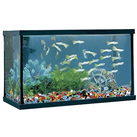 ICA HP8 Acuario Happy Pez, Negro