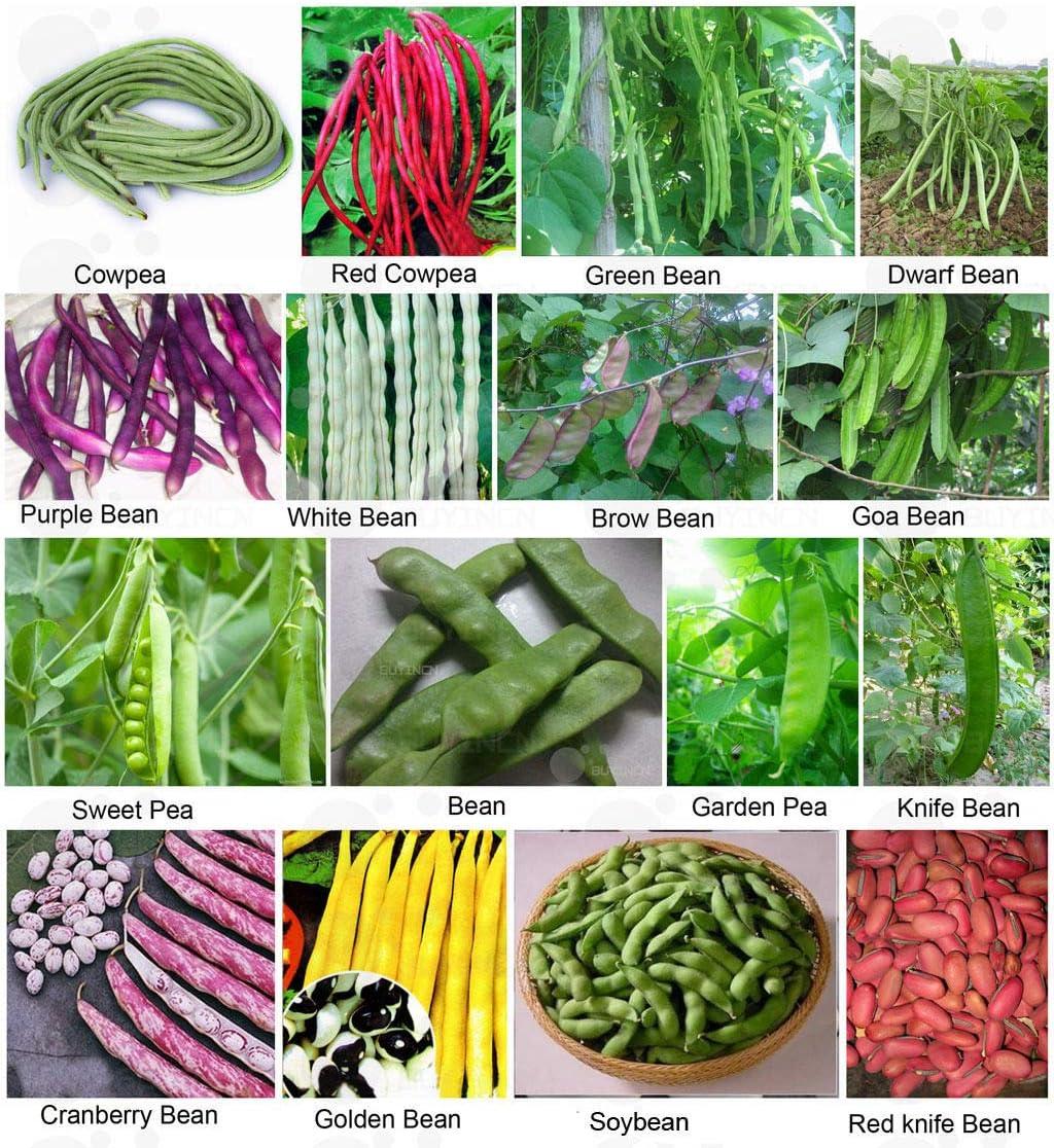 ASTONISH: Semillas de Guisante Dulce 20: Semillas de hortalizas ...